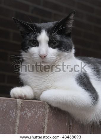 A cat resting on a brick wall