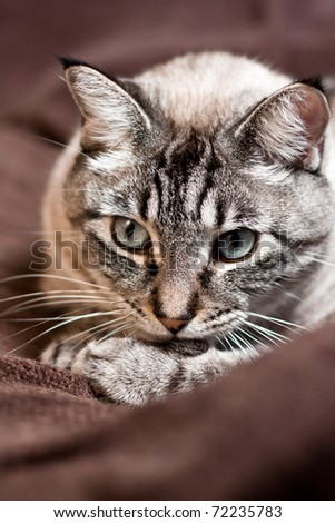 A cat seems to be thinking about his stuff - stock photo