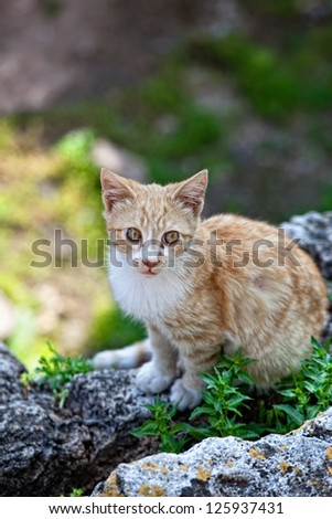 A cat sitting on ruins in the old city of Antalya Turkey - stock photo