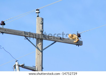 A cat stranded up on a power pole trying to figure out how to get down. - stock photo