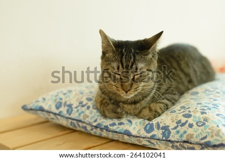 a cat taking nap - stock photo