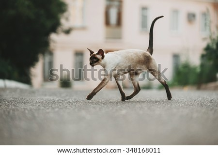 A cat walks in the courtyard