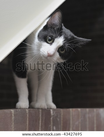 A cat with head tilted - stock photo