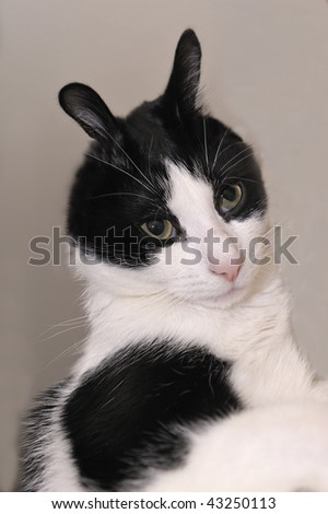 A cat with long ears - stock photo