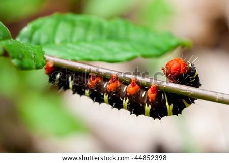 a caterpillar is climbing on a tree. - stock photo