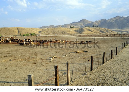 A cattle feed lot nestled against the California foothills