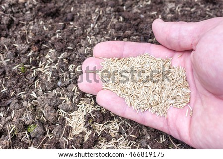 A caucasian hand holding grass seed above soil