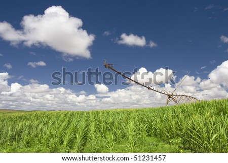 A center modern pivot irrigation system in a green cultivated land farm field