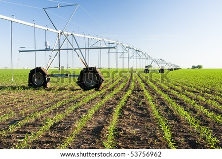 a center pivot irrigation system in a corn field
