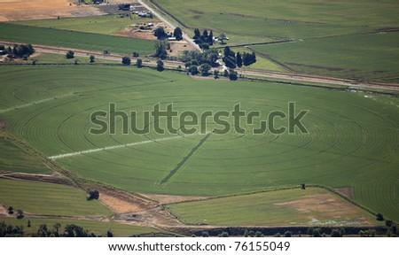 A center pivot sprinkler watering an alfalfa field - stock photo