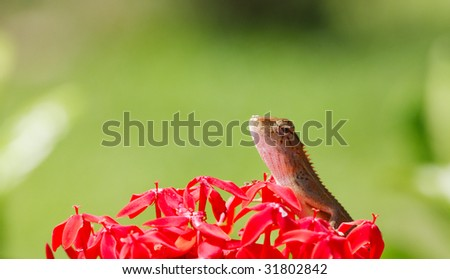 A Chamaeleon sitting on bunch of red flowers - stock photo