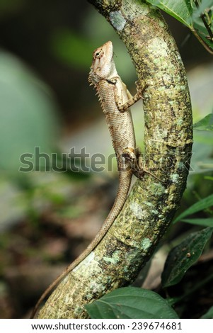 A chameleon climbs up on a tree