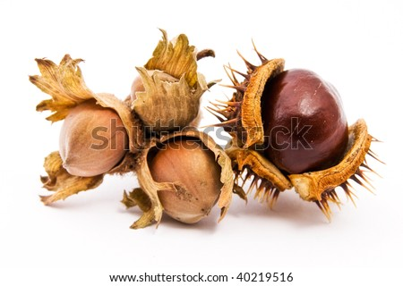 A chestnut and a hazelnut isolated on white