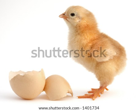 a chick leaving the shell