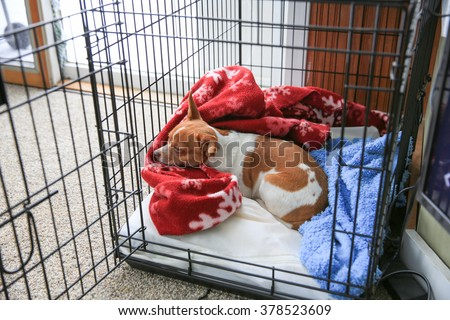 A chihuahua dog sleeping in her crate  - stock photo