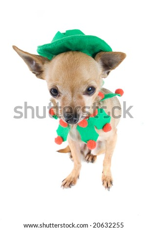 a chihuahua dressed up as an elf