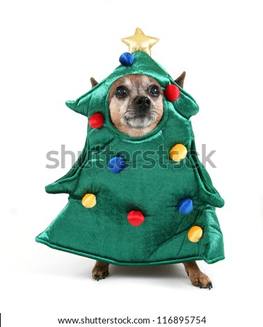 a chihuahua dressed up for christmas as a tree