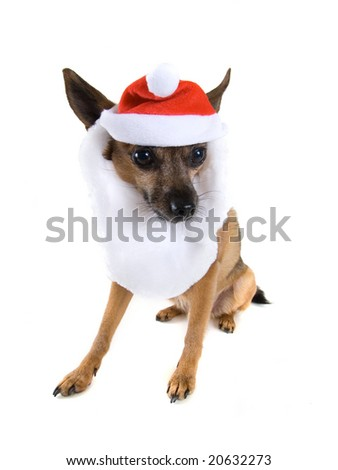 a chihuahua mix dressed up as santa claus
