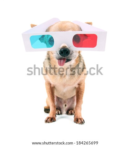 a chihuahua with 3D movie glasses on  - stock photo