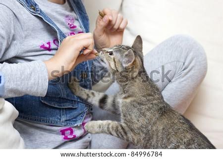 A child feeding kitten - stock photo