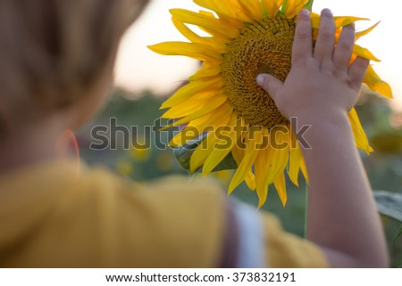 A child hand gentle touching the sunflower.