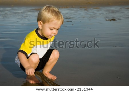 a child is looking at seaweed at the beach - stock photo
