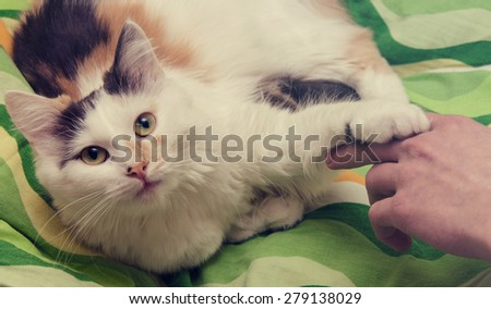 A children hand is playing with cat - stock photo