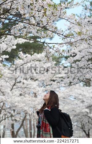 A Chinese Girl enjoying Cherry Blossom in Seoul Korea - stock photo