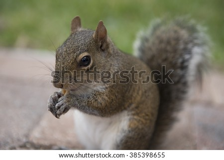 A chipmunk is holding crackers - stock photo