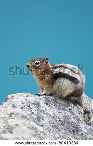 A chipmunk  sitting on a rock high above Moraine Lake in Banff National Park.  The background is lake water, not sky. - stock photo