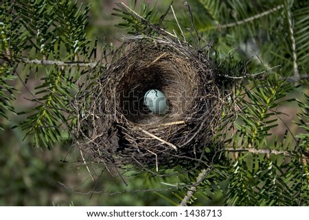 a chipping sparrow egg - stock photo