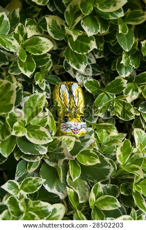 A chocolate easter bunny hidden between the leaves - stock photo