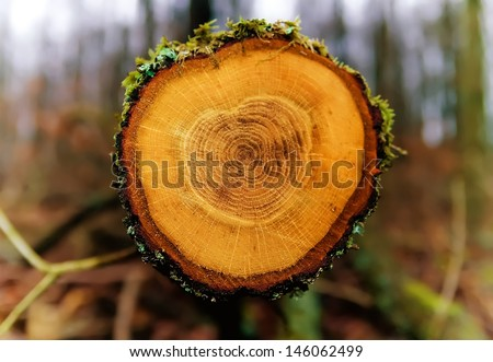 A chopped off tree showing annual rings. - stock photo