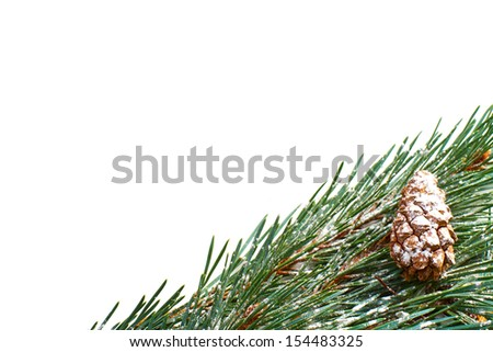 A Christmas pine tree branch and cone on a white background.