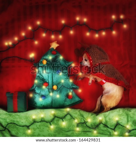 a christmas scene with a chihuahua (soft focus with a glow filter added) - stock photo