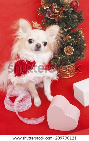 A Christmas Tree And Chihuahua