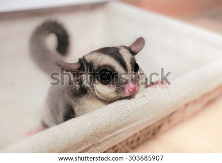 Download Indoor Chubby Adorable Dog - stock-photo-a-chubby-adorable-sugar-rider-in-a-basket-303685907  Picture_817735  .jpg