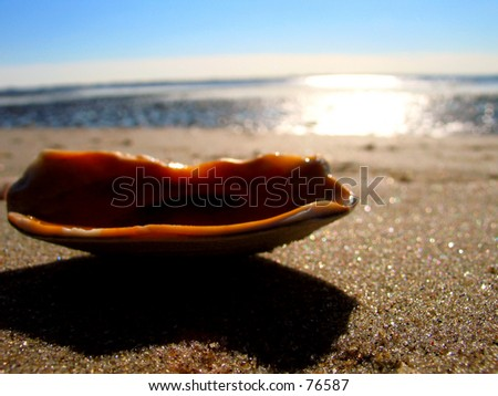 A clam laying on a beach