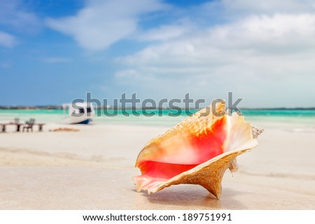 A cleaned Queen Conch shell sits on an oceanfront table, Providenciales, Turks and Caicos Islands - stock photo