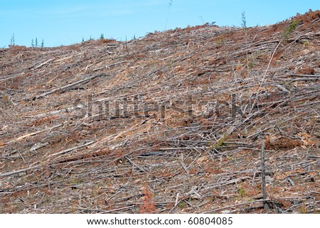 A clear cut forest on a mountain side with only debris left behind - stock photo