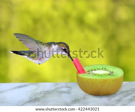 A clever female Ruby- throated Hummingbird (Archilochus colubris) using a straw to drink nectar from a kiwi fruit. - stock photo