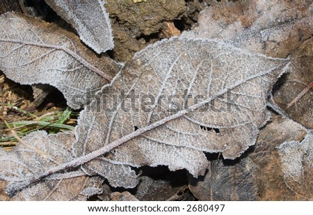 A close image of a frozen leaf