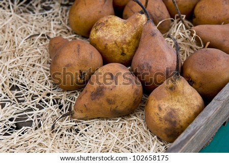 A close shot of ripened brown pears. - stock photo