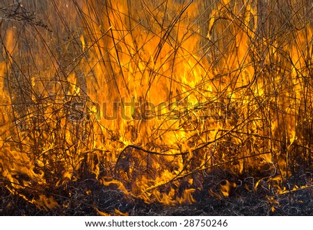 A close uo of the flame of brushfire. - stock photo