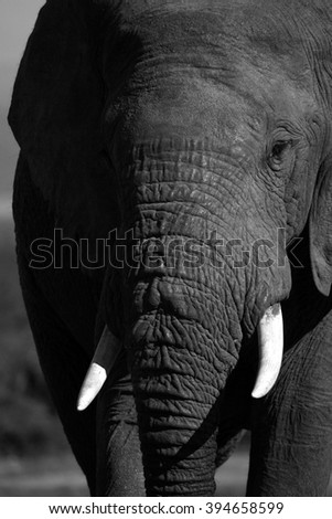 A close up abstract image of an elephants face. - stock photo