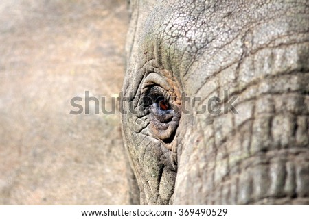 A close up abstract image of an elephants face and eye. Showing the texture of the skin. South Africa