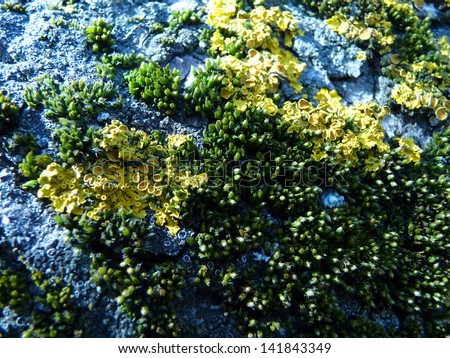A close up from moss on a tree trunk. - stock photo