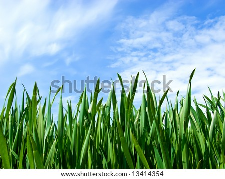 A close-up grass landscape with blue sky in the background