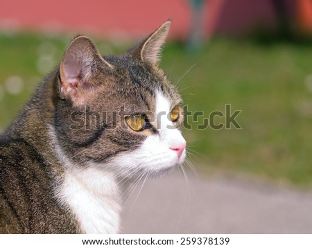 A close-up image of a tabby cat.  - stock photo