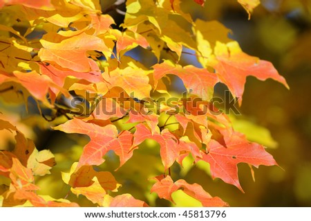 A close up image of autumn leaves.